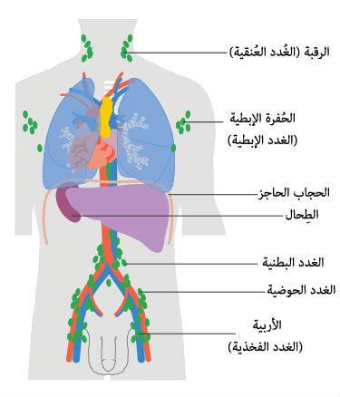 علاج سرطان الغدد الليمفاوية و أورام الغدد الليمفاوية مركز بريموم لعلاج الأورام